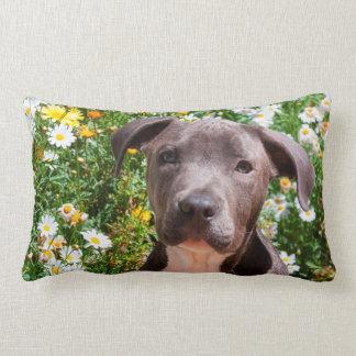 Staffordshire Bull Terrier puppy portrait Lumbar Pillow