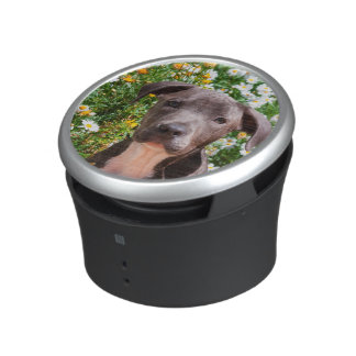 Staffordshire Bull Terrier puppy portrait Speaker