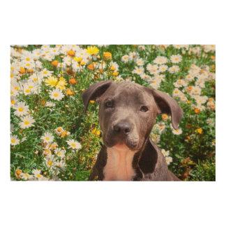 Staffordshire Bull Terrier puppy portrait Wood Prints