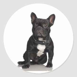 Staffordshire Bull Terrier Sticker