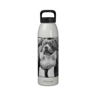 Staffordshire Terrier americano Botella De Beber