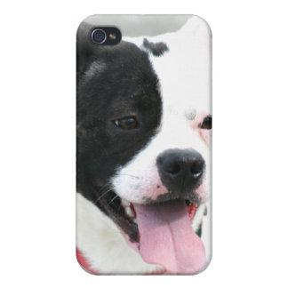 Staffordshire Terrier americano iPhone 4 Cárcasas