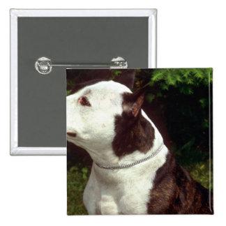 Staffordshire Terrier americano Pin