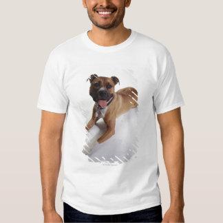 Staffordshire Terrier americano que se acuesta, Playera