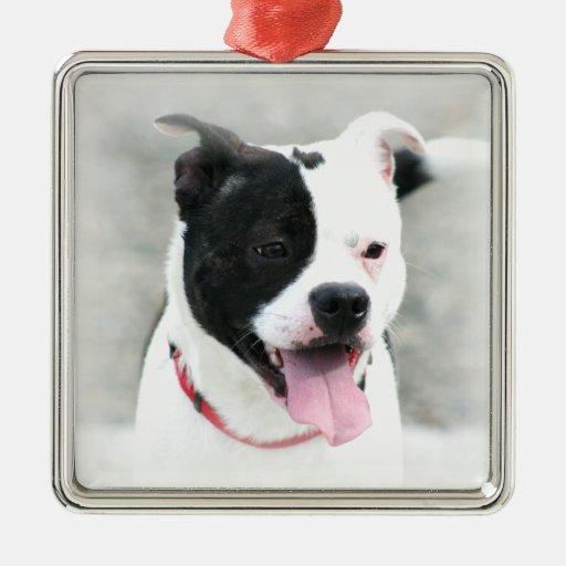 Staffordshire Terrier ornament