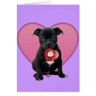 Stafforshire bull terrier puppy card