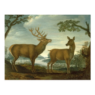 Stag and hind in a wooded landscape postcard