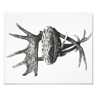 Stag antlers chair photo
