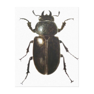 Stag Beetle 2011 Canvas Print