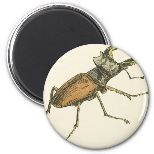 Stag Beetle 2 Inch Round Magnet