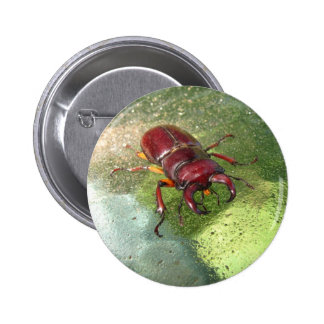 Stag Beetle button