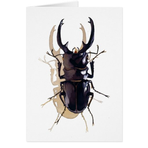 """Stag beetle"" Insect Watercolor Art Card"