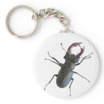 Stag beetle keychain