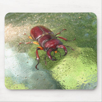 Stag Beetle ~ mousepad