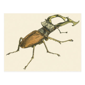 Stag Beetle Post Cards