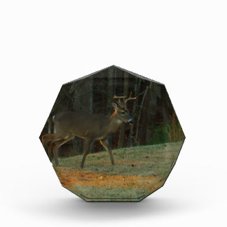 Stag / Buck  Deer Green Camouflage Award
