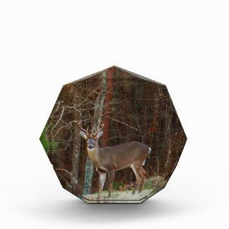 Stag / Buck  Deer Oak Camouflage Award