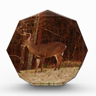 Stag / Buck  Deer Red Oak Camouflage Acrylic Award