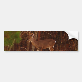 Stag / Buck  Deer Red Oak Camouflage Bumper Sticker