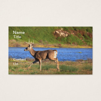 Stag Business Cards