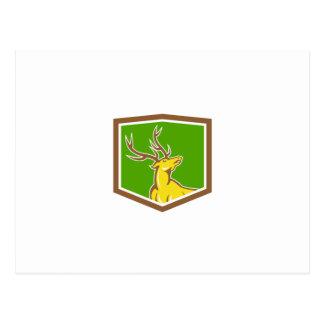 Stag Deer Looking Up Shield Cartoon Postcard