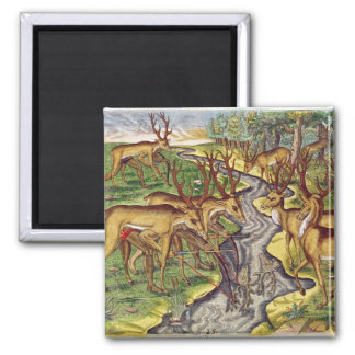 Stag Hunt, from 'Brevis Narratio' 2 Inch Square Magnet