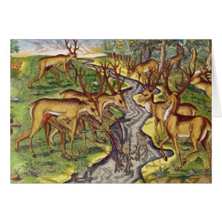 Stag Hunt, from 'Brevis Narratio' Greeting Cards