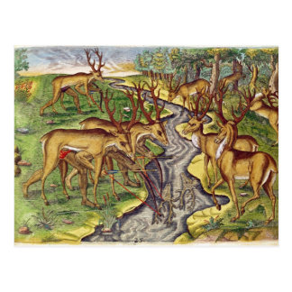 Stag Hunt, from 'Brevis Narratio' Postcard