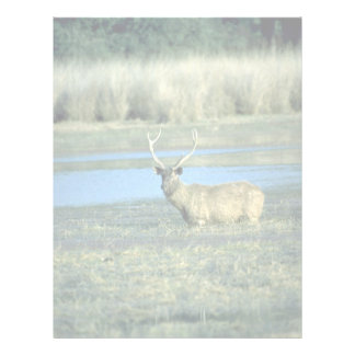 Stag in water letterhead