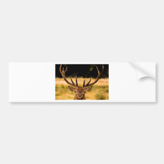stag of richmond park bumper sticker