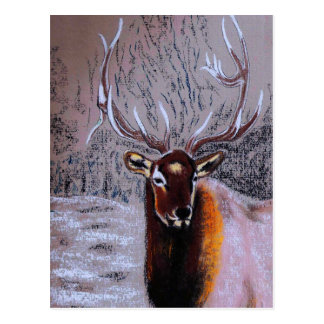 stag - postcard