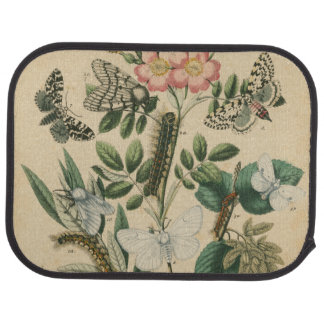 Stages of Butterfly Life by Vision Studio Car Floor Mat