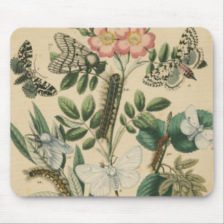 Stages of Butterfly Life by Vision Studio Mouse Pad