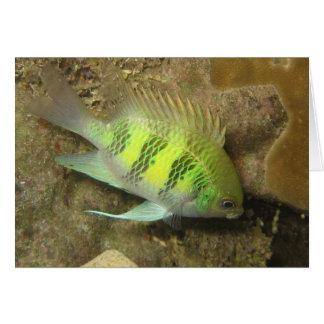 Staghorn Damselfish Card
