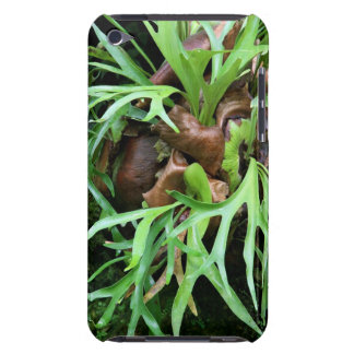 Staghorn Fern Case-Mate iPod Touch Barely There iPod Touch Case-Mate Case