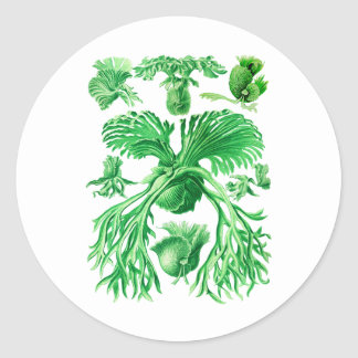 Staghorn Fern Classic Round Sticker