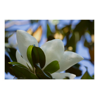 Stained Glass Sky Southern Magnolia Poster Print