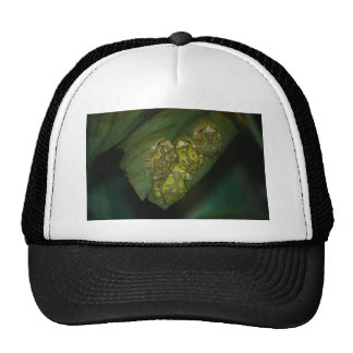Stained Glass Tree Frogs Trucker Hat