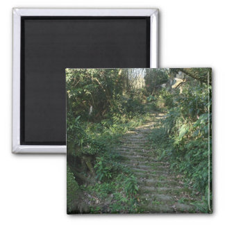 Stairway to the trees magnet
