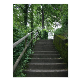 Stairway to the trees photographic print