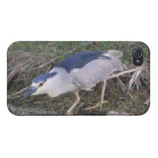 Stalking Black-Crowned Night-Heron 4/4s Spe iPhone 4 Covers