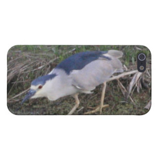 Stalking Black-Crowned Night-Heron 4/4s Spe iPhone SE/5/5s Case
