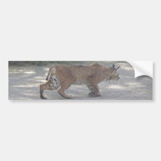 Stalking Bobcat Bumper Sticker