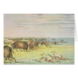 Stalking buffalo greeting card