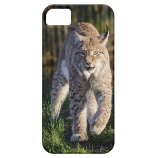Stalking Eurasian Lynx iPhone SE/5/5s Case