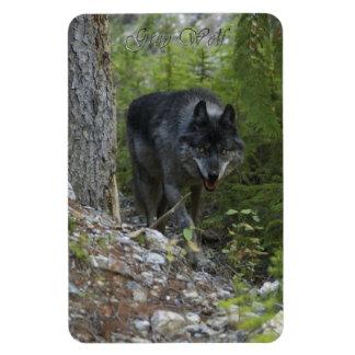 Stalking Grey Wolf 2 Wildlife Art Premium Magnet