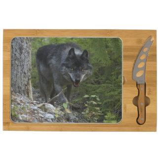 Stalking Grey Wolf & Forest Wildlife Photo Cheese Platter