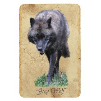 Stalking Grey Wolf Wildlife Art Premium Magnet