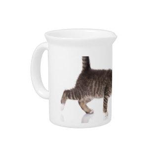 stalking kitten beverage pitchers