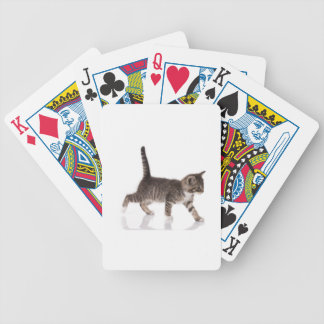 stalking kitten bicycle playing cards